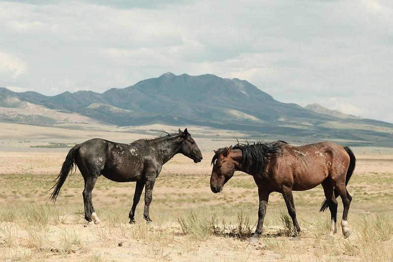 Onaqui Wild Horses – Dugway, UT – Fujifilm X-T30